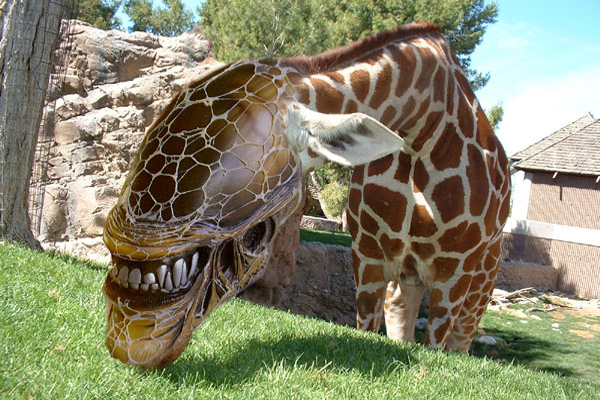 A weird side of animals
